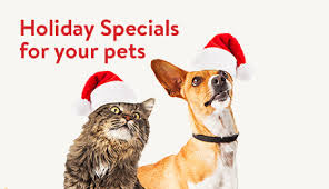 pet christmas pet supplies walmart