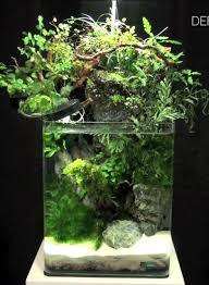 Aquascape Environmental 140 Best Aquascaping Images On Pinterest Aquarium Ideas
