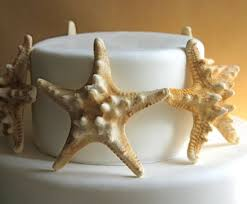 starfish decorations these chocolate starfish cake toppers are realistic looking and