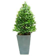 Topiary Frames Online Topiary Plants Style Landscaping U0026 Backyards Ideas Best Of