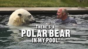 docs there u0027s a polar bear in my pool youtube