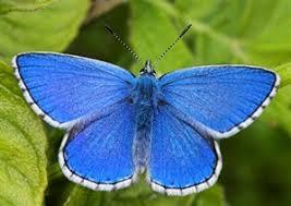 butterfly conservation identify a butterfly