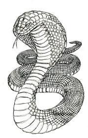 cobra clipart sketch pencil and in color cobra clipart sketch