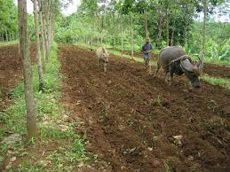 cropping system diversification for food production in mindanao