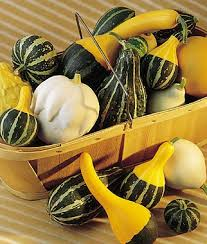 266 best out of my gourd images on pumpkins gourds