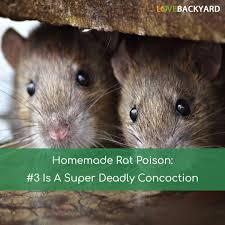 homemade rat poison 3 is a super deadly concoction nov 2017