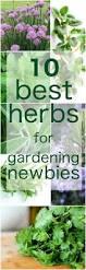 kitchen herbs herbal gardening for beginners indoor herb garden