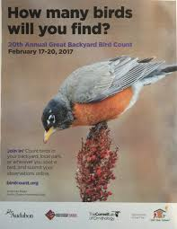 great backyard bird count 2017 u2013 sib