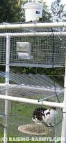 rabbit hutch plans pvc outdoor rabbit hutch set up