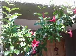 vines u2013 tjs garden
