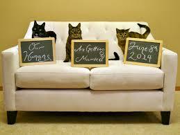 chalkboard halloween cat clear background 21 best cat bride images on pinterest cat wedding wedding ideas