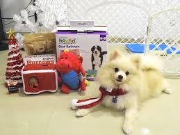 last minute christmas gift ideas for your dogs vanillapup