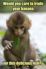 Baby Monkey Meme - funny monkey images with captions allofpicts