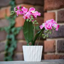 Artificial Orchids Artificial Orchids In Pot Pink
