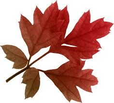 autumn leaves png images transparent free download pngmart com
