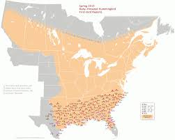 St Louis Map Usa by A Map Tracks The Northward Migration Of Hummingbirds The