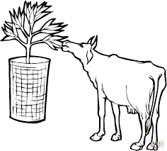 cow eat leaf coloring page free printable coloring pages