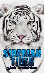 tiger apk siberian tiger slot machine for android free siberian