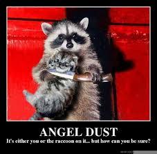 Angel Meme - angel dust meme guy