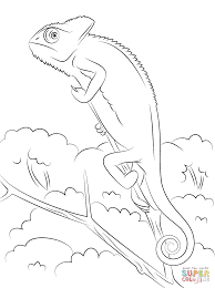 veiled chameleon coloring page free printable coloring pages