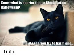 Halloween Cat Meme - know what is scarier than a black cat on halloween meaifai see you