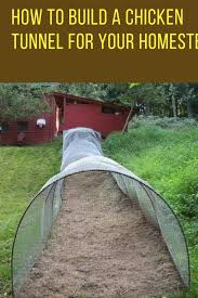 how to build a diy backyard chicken tunnel homesteads coops and
