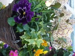 gardening world limited bedding plants u0026 perennials