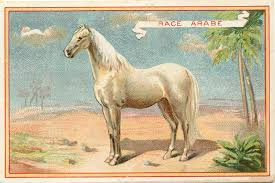 white mustang horse vintage graphic beautiful white horse the graphics fairy
