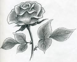 design flower rose drawing draw a rose quickly simply and easily