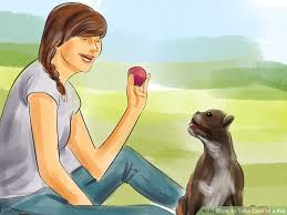 how to take care of a pet 10 steps with pictures wikihow