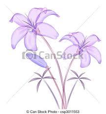 purple calla calla illustration drawing of purple calla lilies in