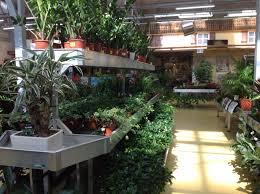 mondo verde garden center indoor remodeling