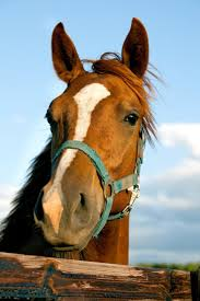 the 25 best facts about horses ideas on pinterest horse facts