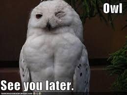 White Owl Meme - hold my calls pleez en tequila es verdad
