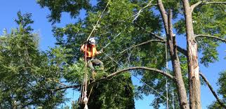 tree removal tree trimming service landscaping service