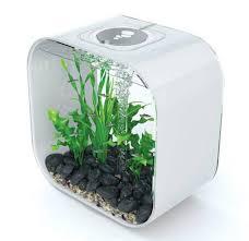 wohnideen minimalistischen aquarium aquarium einrichtung sorgt für das wohlfühlen der wassertiere