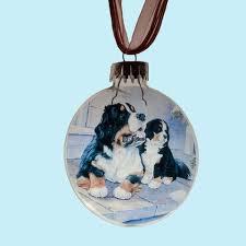 bernese mountain big gentle dogs