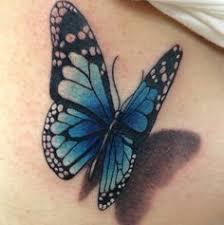 blue butterfly blue butterfly