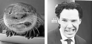 Benedict Cumberbatch Otter Meme - well nailed it now otters are just mocking him nerd girl