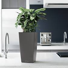Self Watering Indoor Planters by Lechuza Charcoal All In One Cubico Self Watering Planter