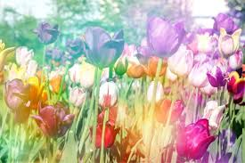 How To Grow A Bulb In A Vase Tulip Facts What To Know About Tulips
