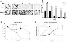 igfbp5 induces cell adhesion increases cell survival and inhibits