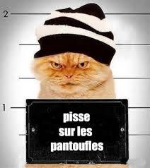 qui pisse sur le canapé cat drole humour chats les canapés