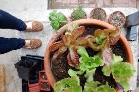 how to start an urban vegetable garden
