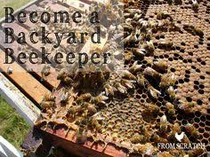 The Backyard Beekeeper The Backyard Beekeeper By Kim Fluttom Is One Of The Most Popular