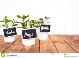 small pot plants with name signs stock image image 43201071