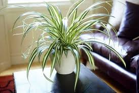 window table for plants what is a good indoor plant for a table near a window in an air
