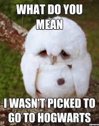 Cuteness Overload Meme - animals memes that are cuteness overload fit for fun fit for fun