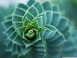 beautiful plants beautiful plant 4k hd desktop wallpaper for 4k ultra hd tv