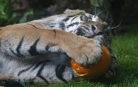 9 friendly neighbourhood zoo animals celebrating halloween the